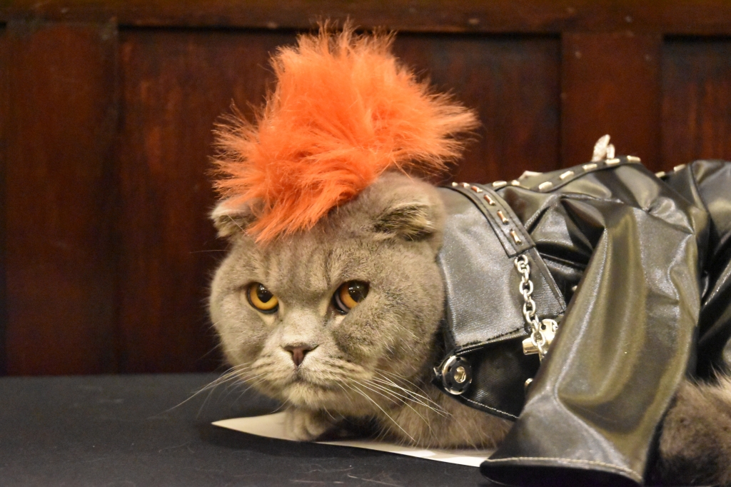 The Algonquin Cat Fashion Show 2019